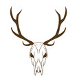 deer skull in tribal style animal skull with vector image vector image