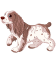 Spaniel dog vector image vector image
