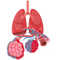 Diagram showing lung cancer vector image vector image