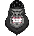 Angry gorilla head vector image vector image