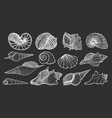 beautiful mollusk sea shells vector image
