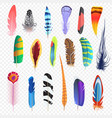colored bird feathers isolated on alpha vector image vector image