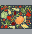 natural vegetables pumpkin cabbage tomatoes vector image