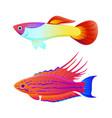 aquaria guppy and swordtail fish inhabitant poster vector image vector image