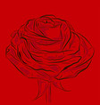 blooming red flower rose ouline vector image