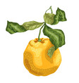 orange fruit made in graphic design on the branch vector image