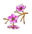 sakura national china blossom tree color vector image vector image
