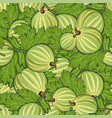 seamless pattern all gooseberry vector image vector image