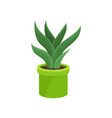 aloe vera in bright green ceramic pot medical vector image