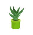 aloe vera in bright green ceramic pot medical vector image vector image