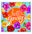 hello spring colotful tulips flowers background vector image vector image