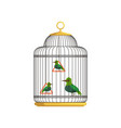 Tropical birds in antique hanging cell beautiful