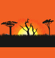 african landscape with trees and sun sunset