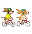 Dog Riding Bicycle vector image