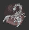 scorpion bug horoscope zodiac element vector image