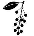 bird cherry berries vector image vector image
