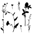 set of drawing plants silhouettes vector image vector image