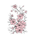 sakura branch hand drawn vector image