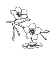 sakura national china blossom tree ink vector image vector image