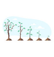 tree plant grow steps stages period phase process vector image
