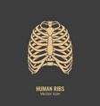 human ribs icon vector image