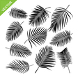 collocetion palm leaves silhouettes vector image vector image