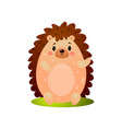 cute forest hedgehog stay smiling at green grass vector image vector image