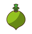 onion fresh vegetable isolated icon vector image