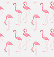 seamless pattern a pink flamingo vector image