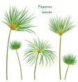 set tropical palm papyrus leaves realistic vector image vector image