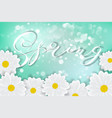 white daisy chamomile flowers on blue sunny sky vector image