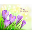 colorful background with crocus vector image