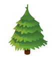green xmas tree icon isometric style vector image