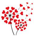 two romantic dandelion heart shape vector image