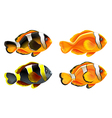 Four colorful fishes vector image vector image