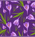 purple crocuses in the snow pattern vector image vector image