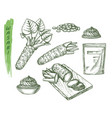 sketch for wasabi or japanese sashimi vector image