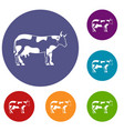 cow icons set vector image