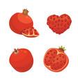 fresh juicy ripe pomegranate fruit whith leaf vector image