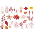set botanical elements in autumn colors vector image vector image