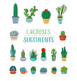 set of cactuses and succulents vector image