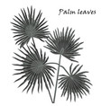 silhouette tropical palm leaves black isolated on vector image vector image