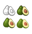 half avocado with seed vintage engraving vector image vector image