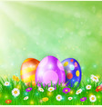 happy easter card with eggs grass flowers vector image vector image