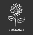 helianthus chalk icon sunflower head with name vector image