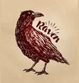 vintage drawn raven crow bird sketch vector image vector image