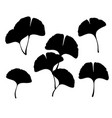 ginkgo biloba leaves and branches silhouette vector image vector image