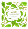 nettle elements set vector image