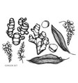 set hand drawn black and white ginger vector image vector image