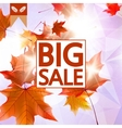 Card with maple leaves autumn sale vector image